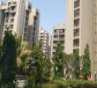3 BHK Flat for Rent in Orchid Whitefield, Ahmedabad